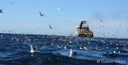 Trawler 'The Krotoa Harvest' on a Cape Town Pelagics trip on 20 August 2011 (c) Dalton Gibbs