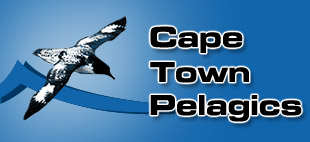 Sea Birding Pelagic Trips South Africa, Cape Town Pelagics